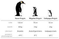 preview_pinguine
